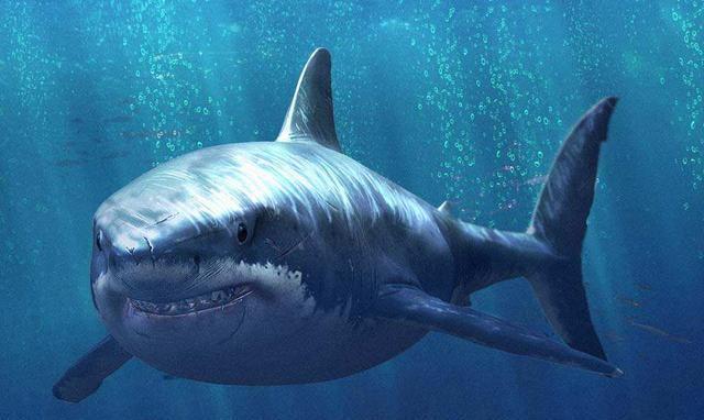 鯊魚 鯊魚,在古代叫作鮫,鮫鯊,沙魚,生活在海洋中,是海洋中的魚類圖片