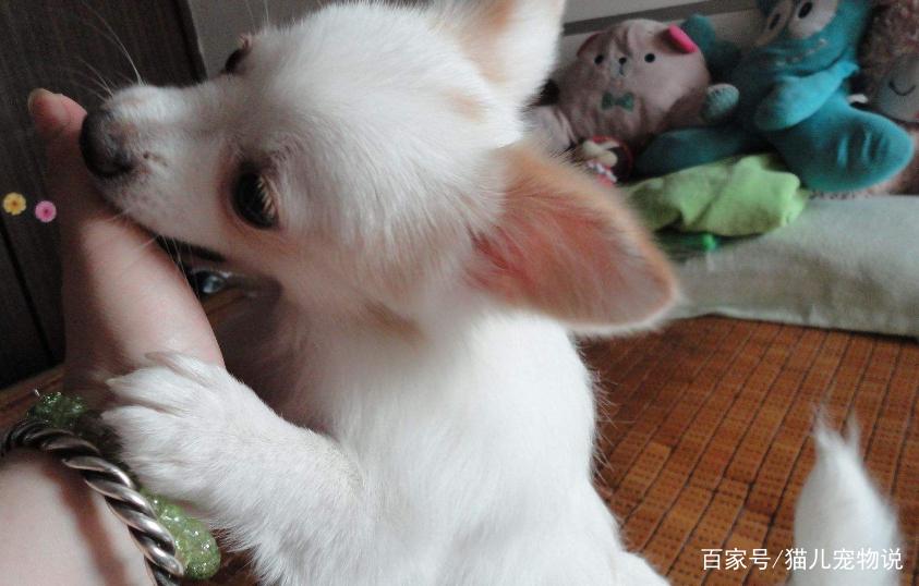 原来狗狗舔主人的手脚是这个意思,现在知道还不晚!