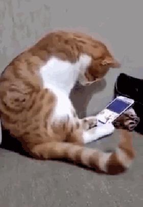 猫咪视频_主人去世后,当猫咪在视频中再一次看到主人的样子,猫咪哭了