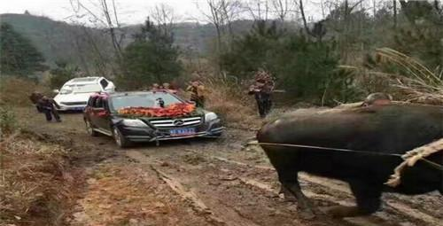 借了辆奔驰越野当婚车, 结果一路表现还不如一头水牛