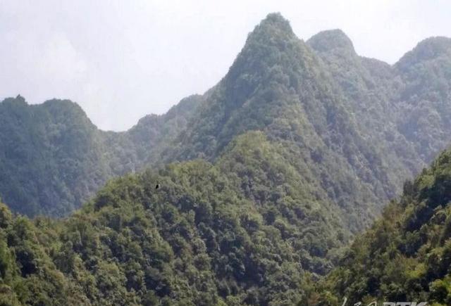 生态茶乡旅游火了—安康白河县卡子镇发展掠影