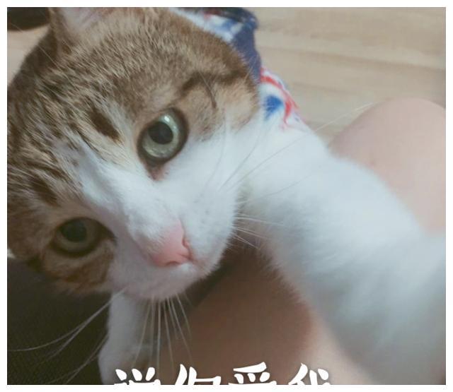 新鲜出炉的猫咪表情包,有6张可以直接拿去当情侣头像