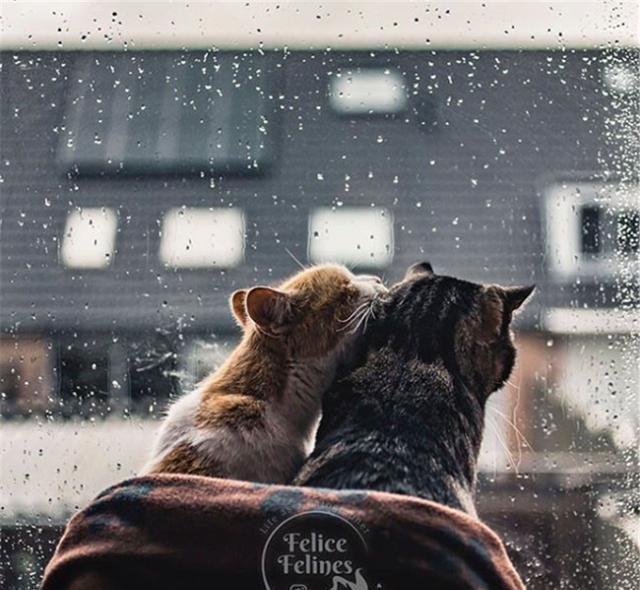 两只喵星人的冬日爱情故事,单身狗只能裹紧我自己的小