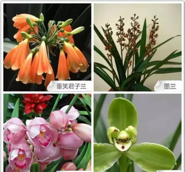 68种兰花,看几遍都记不住 最贵的这盆咋也忘不掉!图片