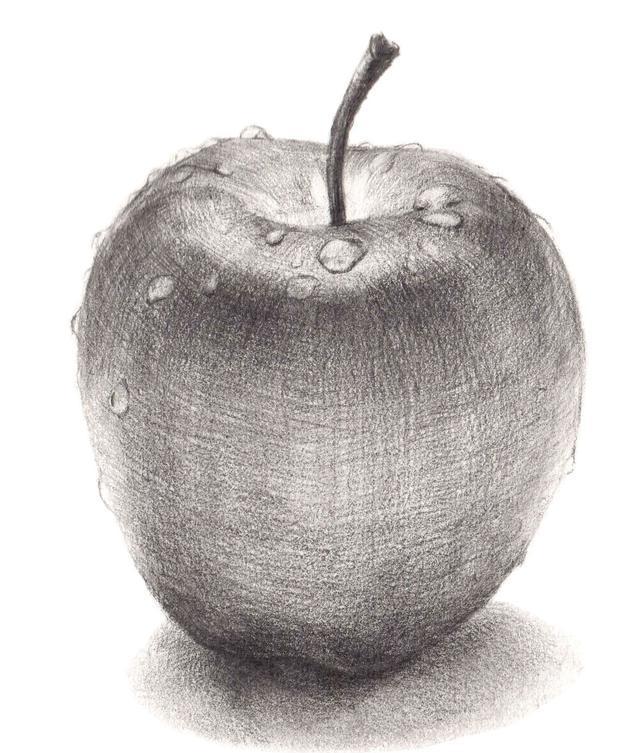 苹果的结构素描图
