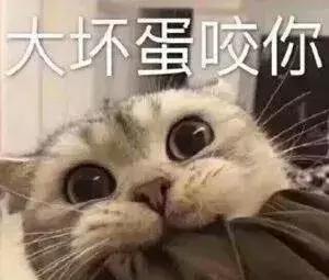 萌猫猫表情包,可爱拿走图片