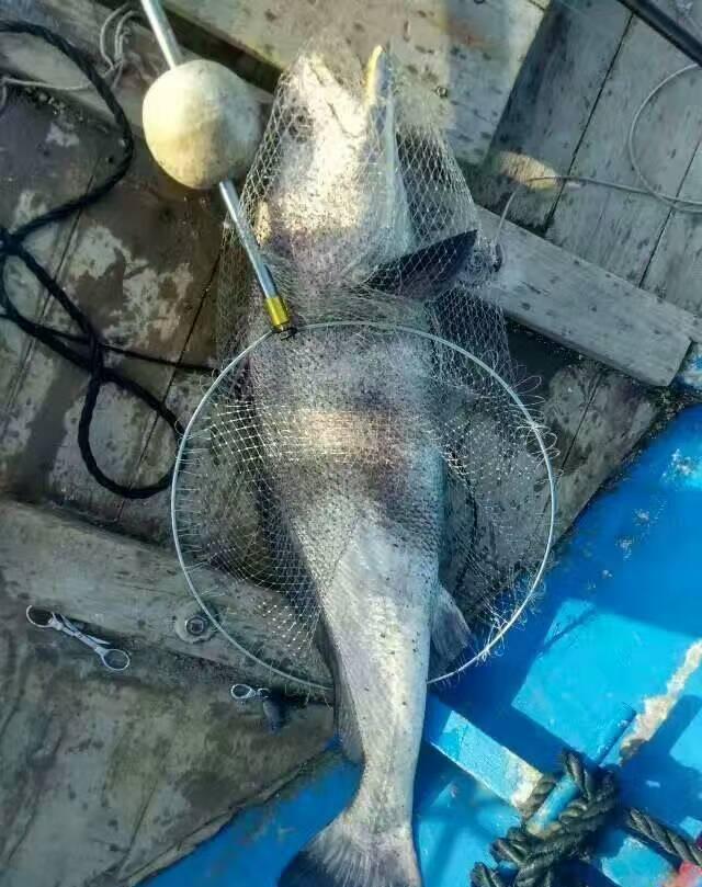 和女朋友去荒岛海钓, 鱼可真多(附大鱼图)记得帮我图片