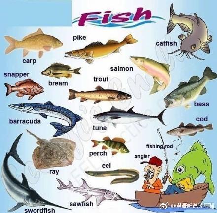 海洋动物英语词汇大全!