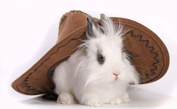 五张超级可爱的兔子,萌萌的,你喜欢兔子吗_新浪看点