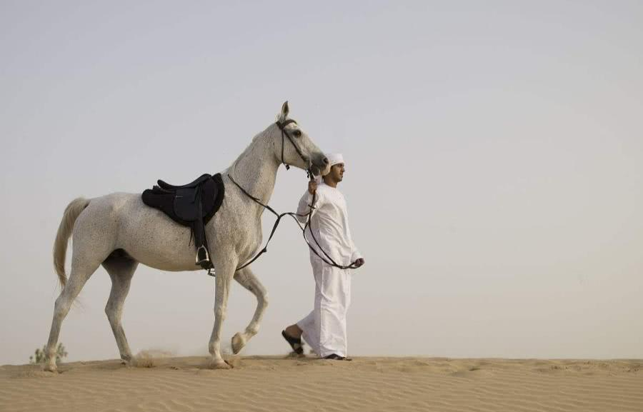 世界上最贵的五种马:汗血宝马仅排第三,你骑过几种?
