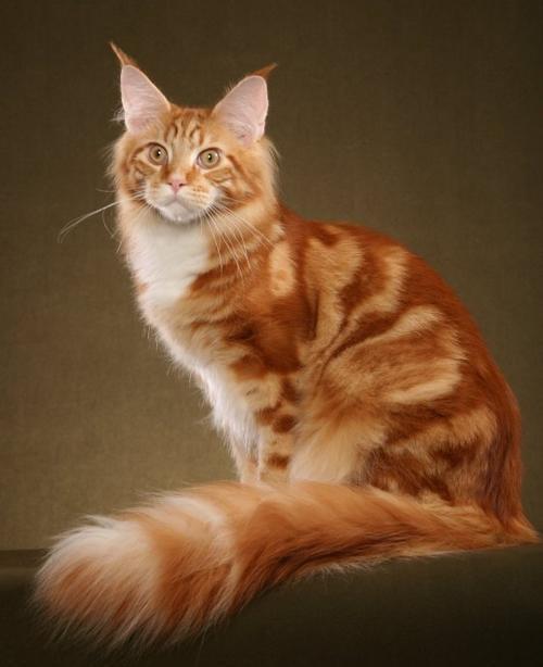 这些可爱的猫咪,你喜欢哪个品种的,爱猫人士请进