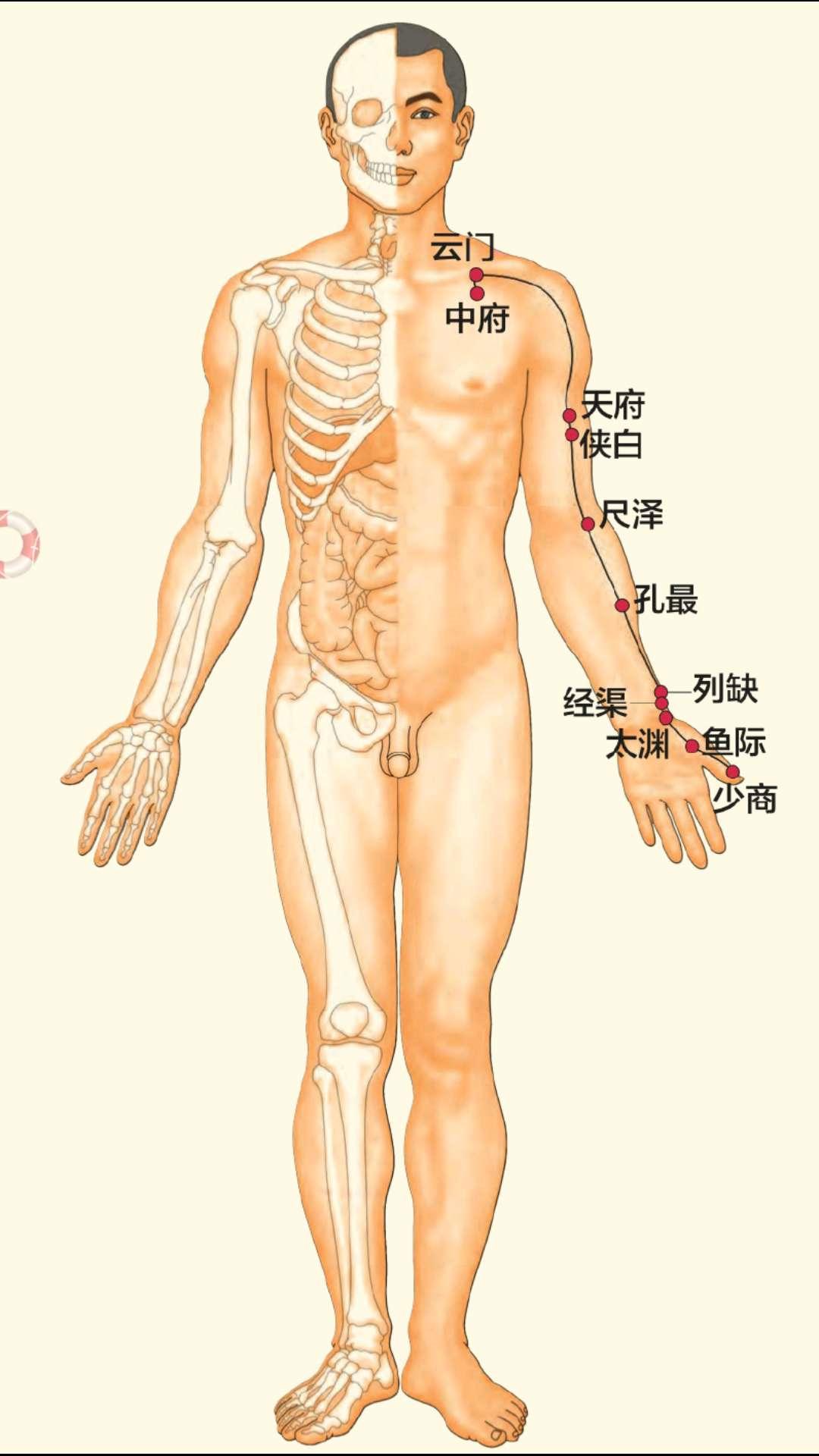 肺经的功能,肺经不通了,你会得那些疾病?