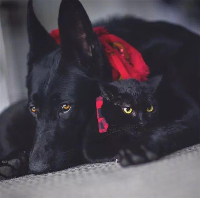 梦见黑猫黑狗