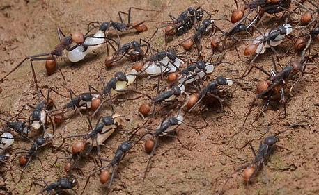 命运坎坷的雄蚂蚁