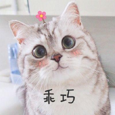 微信动物头像小猫咪2018 可爱超萌的萌宠大人