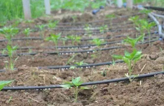 在水肥一体化过程中如何避免过量灌溉?
