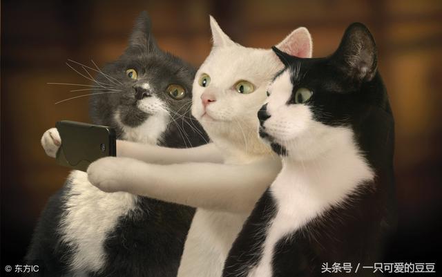 猫是一种很神奇的动物,长得可爱又会卖萌