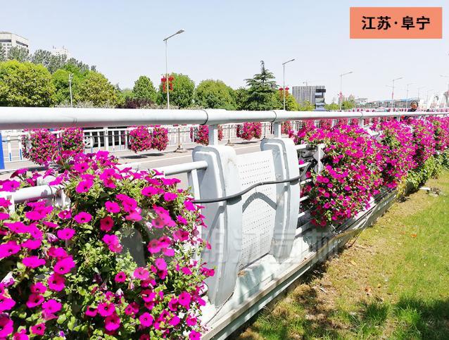 朗汀集团·江苏阜宁护栏挂花案例