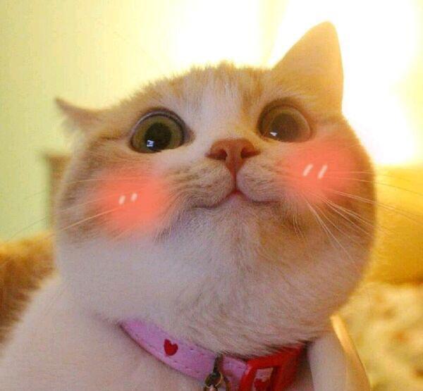 小仙女专用表情包,可爱猫咪