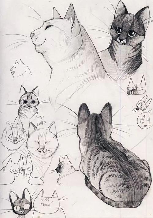看了这些教程,零基础也能画出特别可爱的猫咪!