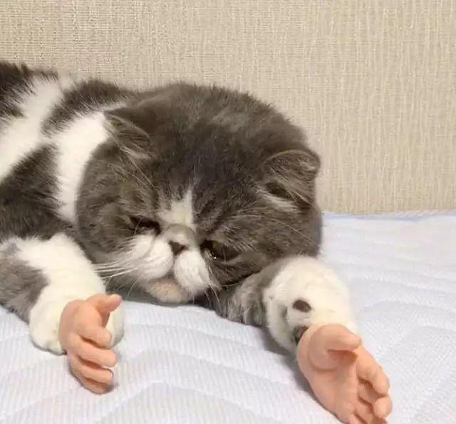 猫:我能怎么办我也很绝望