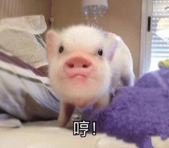 各种可爱小猪猪表情包