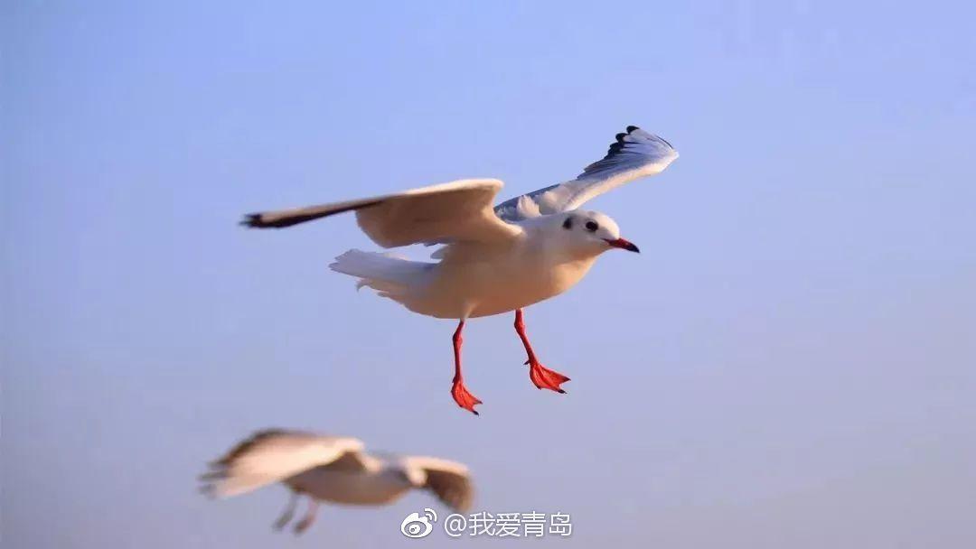 (李永林/摄)图片