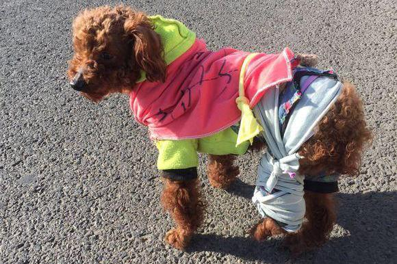 捡到一只因病遗弃的小泰迪,收养一个月后,狗狗却给她
