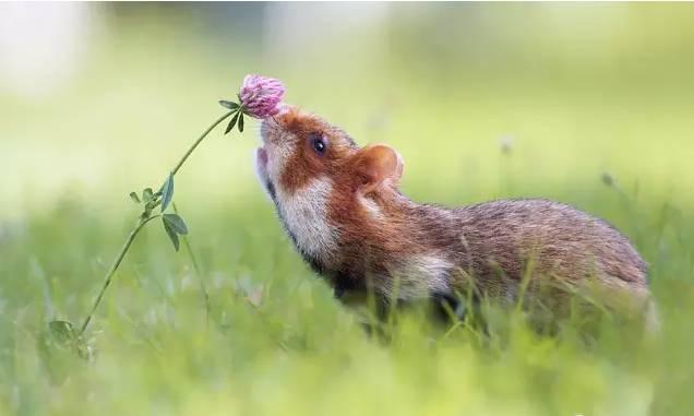 动物摄影|萌宠闻花,太可爱了!