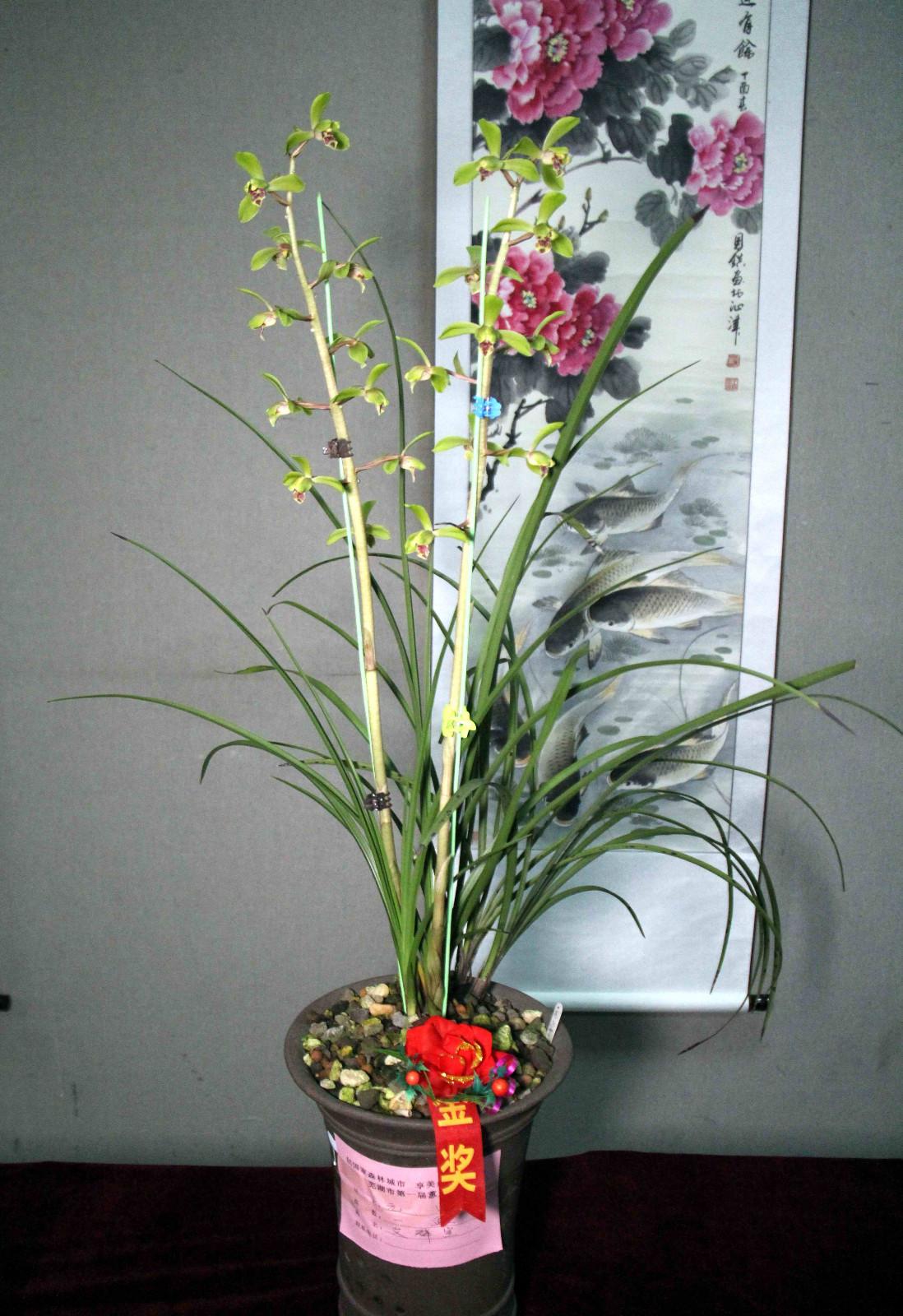 荡字,为竹瓣荷形水仙,被列入传统蕙兰老八种之一,为蕙兰中典型小荷瓣图片