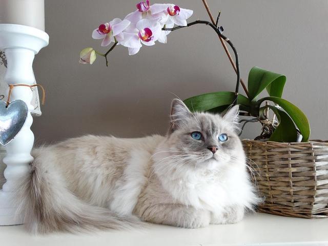 孕妇养猫注意事项_如何选购小猫?养猫新手注意事项