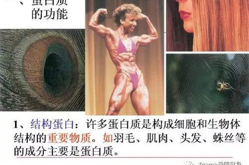 当年作文女王书上的高中肌肉,究竟是何方神圣困难面对生物勇敢高中图片