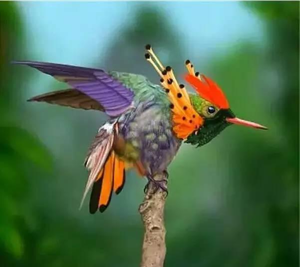用摄影来欣赏这个世界 : 美丽鸟儿, 天生一件美花衣