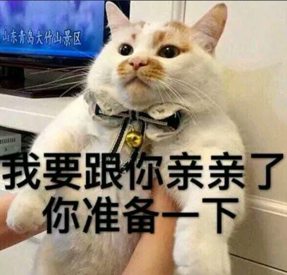 抖音系列猫咪,可爱撩人表情搞笑上大饼图挂脖子客官,表情拿走