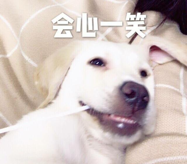 狗狗年龄 我v年龄着这个像机不该有的a年龄和趣图-表情壁纸表情手头包图片