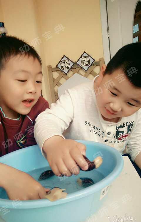 幼儿园观察记录|小蜗牛三千问,和蜗牛一起探索,共同成长