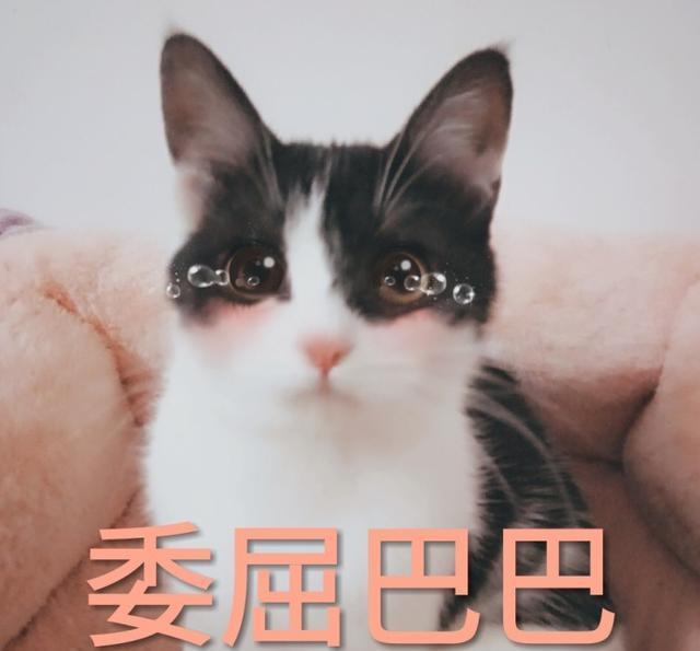 猫咪各种委屈巴巴的表情,看到后你还忍心责怪他们吗?