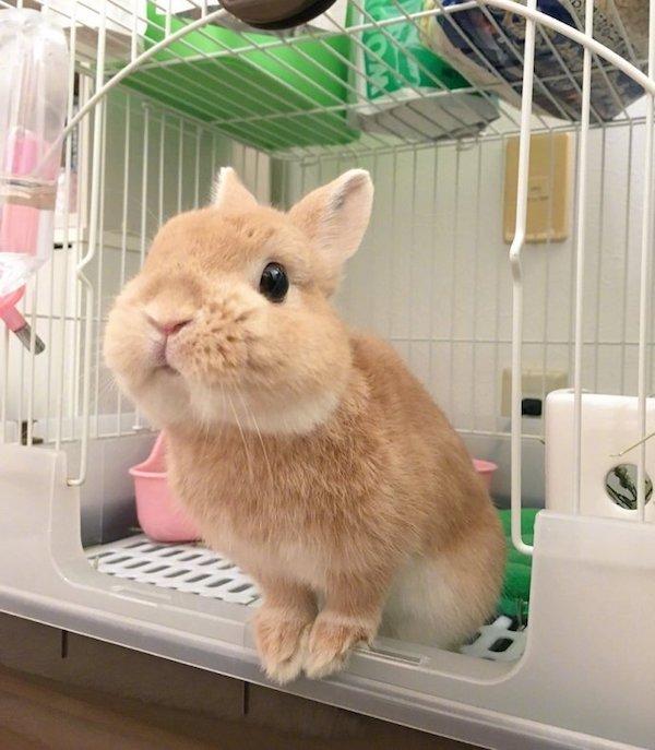 推特上的可爱兔兔神女puni,超萌级颜值我要pic女孩生网名图片