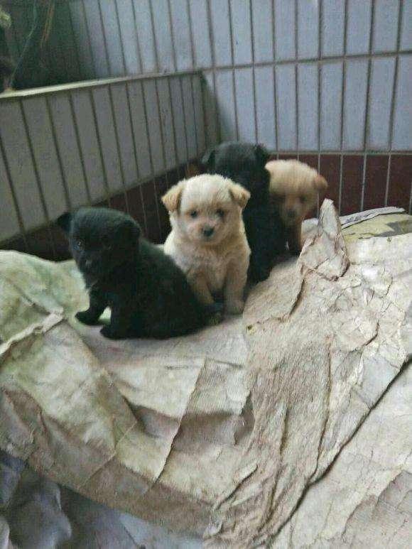 女孩好心抱回家垃圾桶里发现注册万和城4只流浪狗,  养了半月白白胖胖!