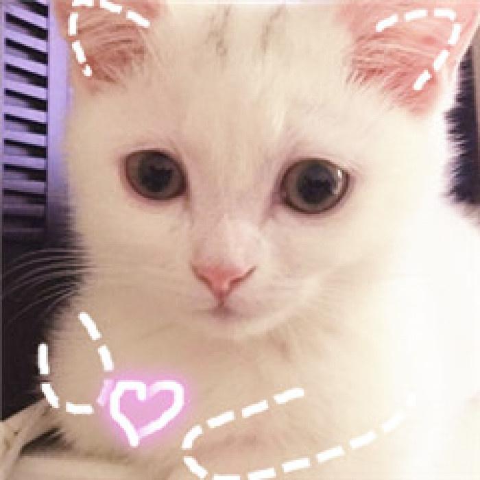 小仙女专用 喵星人表情包图片
