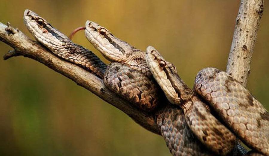 位于中国恐惧的5A景区:岛上全邑是毒蛇,当今因太风险对外面关
