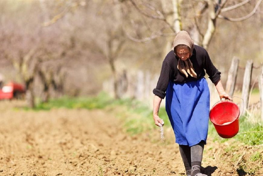 中国6亿农民,真正种田的还剩多少?这才是农村