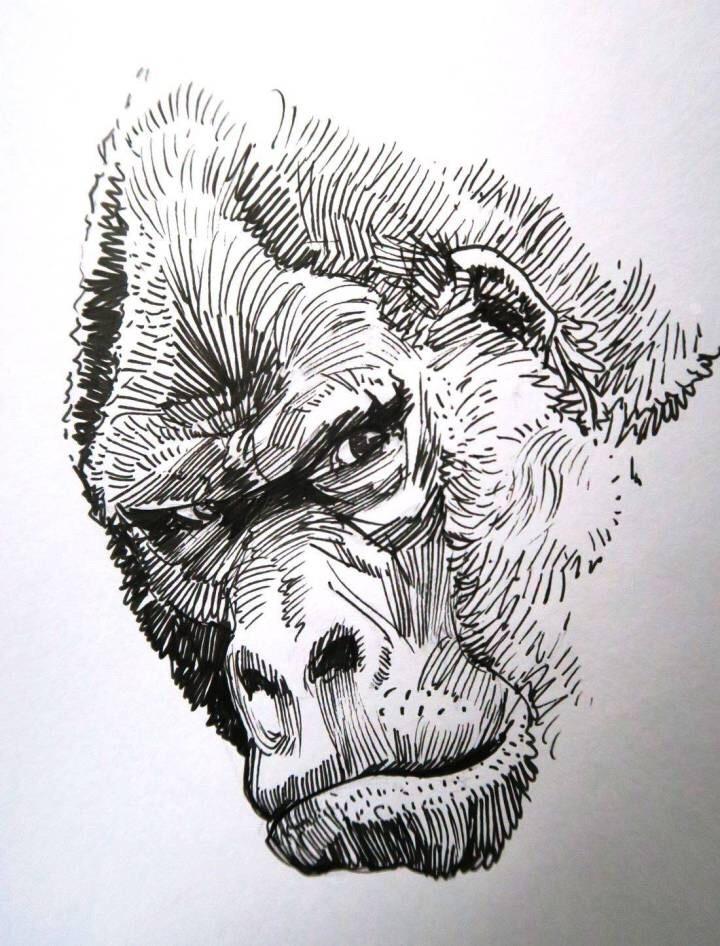 手绘黑白野生动物 | 加拿大画师 hugo puzzuoli