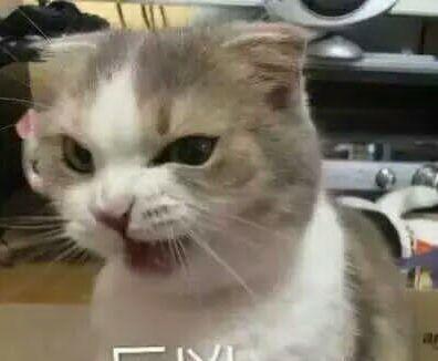 hifumi,一只不知道生日,不知道性别但是超级凶的猫咪,看这表情就知道图片