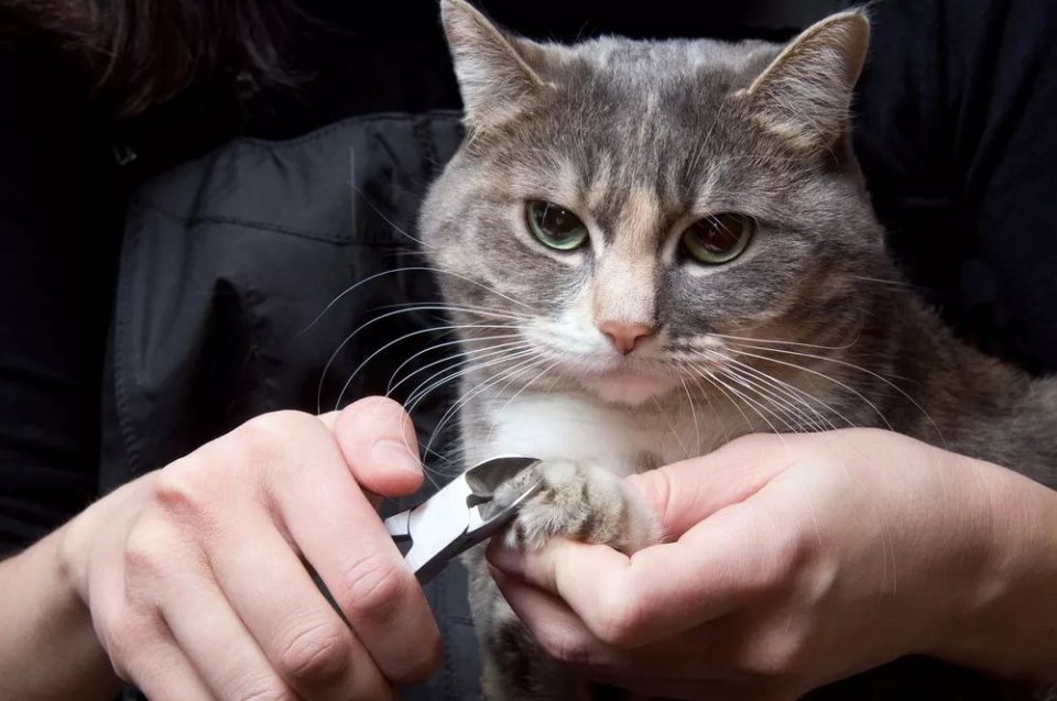 猫爪图片大全可爱壁纸