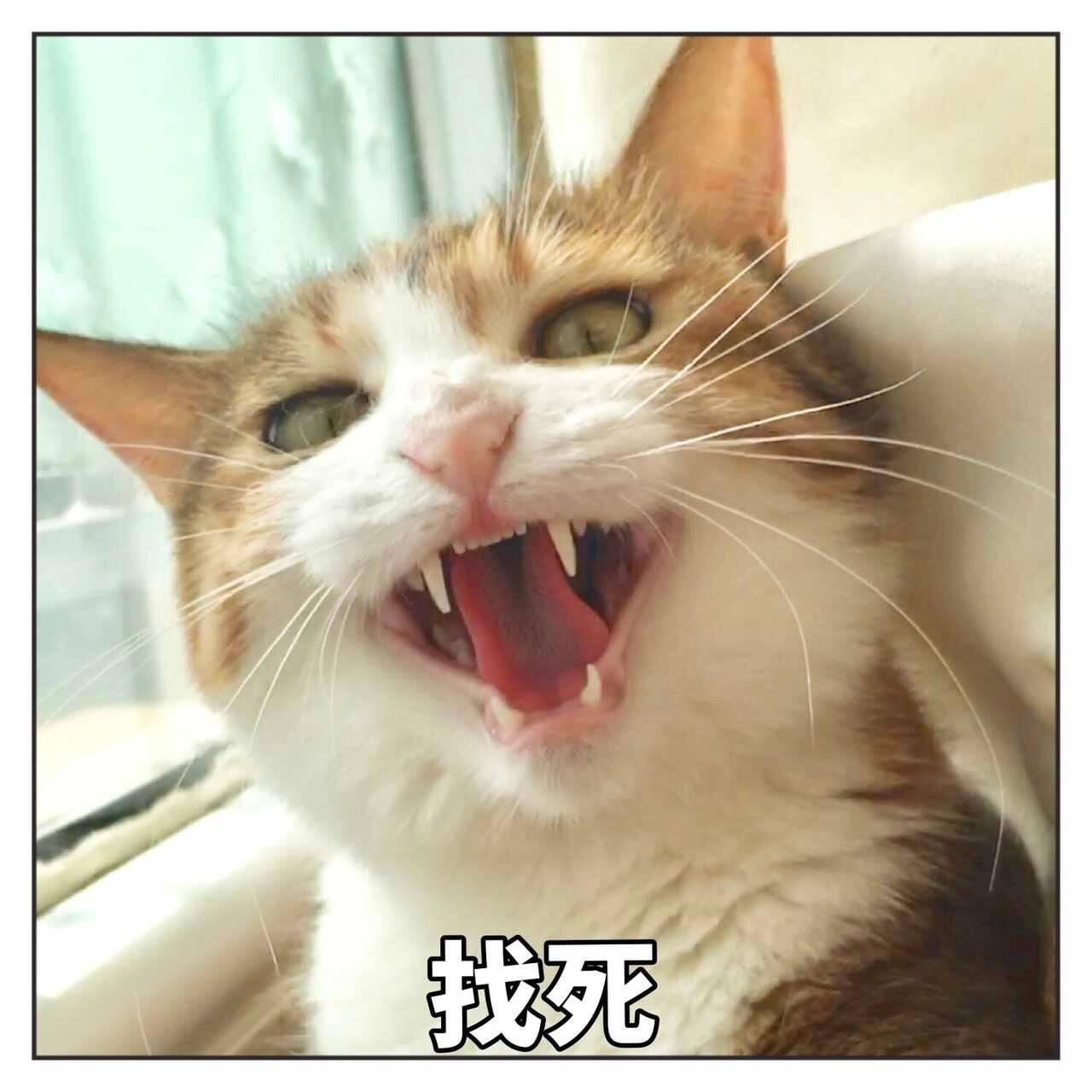 表情猫咪NO.302:嗯…疑问?你再过来笑容叫表情我要包猖狂越来越