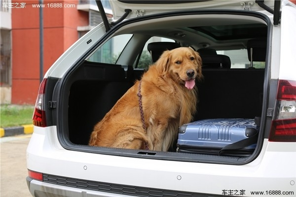 顾家就要向SUV妥协?有颜值有操控的旅行车了解一下