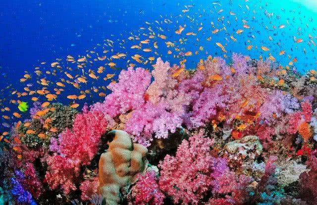 科技生活  珊瑚礁主要由珊瑚虫的碳酸钙骨骼构成,为海洋中许多动植物图片