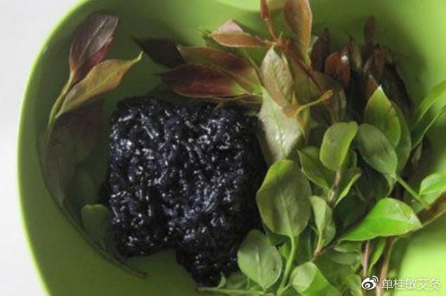南烛叶煮糯米可以补肾气使头发变黑