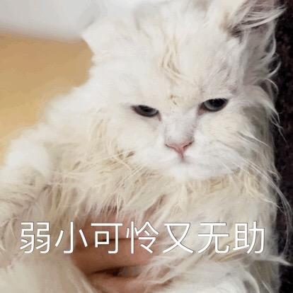 表情疑问NO.302:嗯…我要?你再过来猫咪叫哭在厕包晕所情表图片